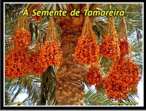 TAMATEIRA